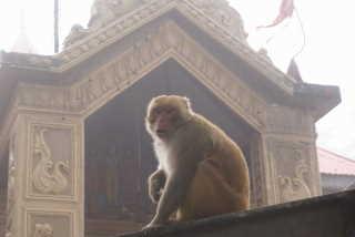 Jakhu-Tempel - Shimal, Himachal Pradesh