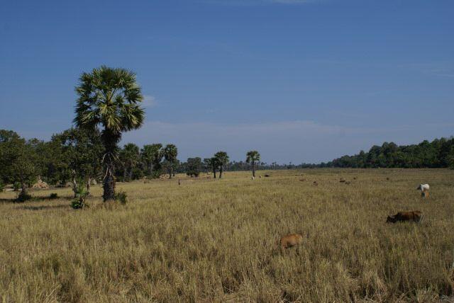 Endlich raus aus Poipet und ab nach Siem Reap