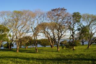 Der Rio Uruguay in der Provinz Corrientes