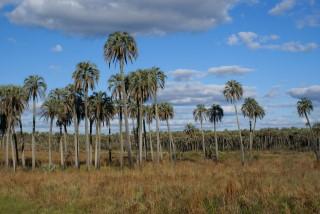 National-Park El Palmar bei schönem Wetter