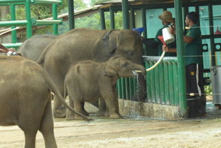 Das Elefant Transit Home in Udawalawe