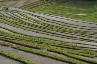 Reisterrassen an der Straße nördlich von Antosari